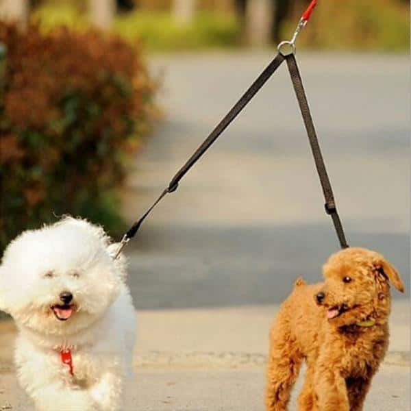 Benefits of Using A Pet's Leash For Your Dog
