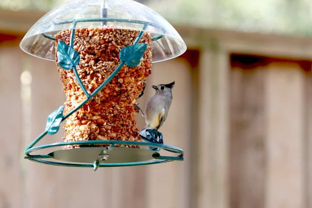 Best Automatic Pet Bird Feeder