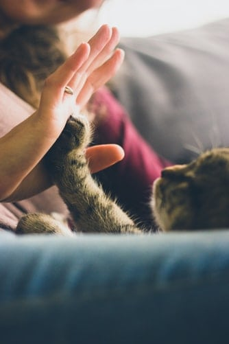 Pet Hair Removal Tools - Helpful Information