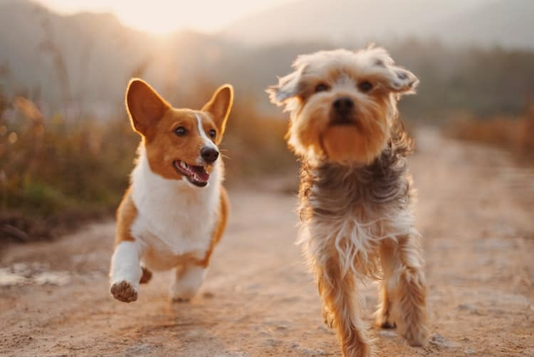 Using Pet Training Tools To Train Your Pet