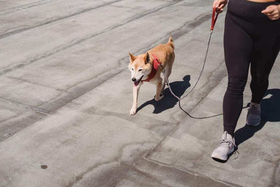 A person walking a dog on a leash