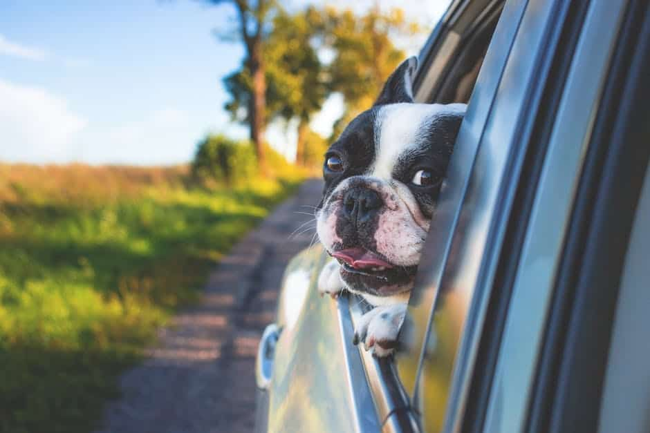 Dog Accessories for Cars