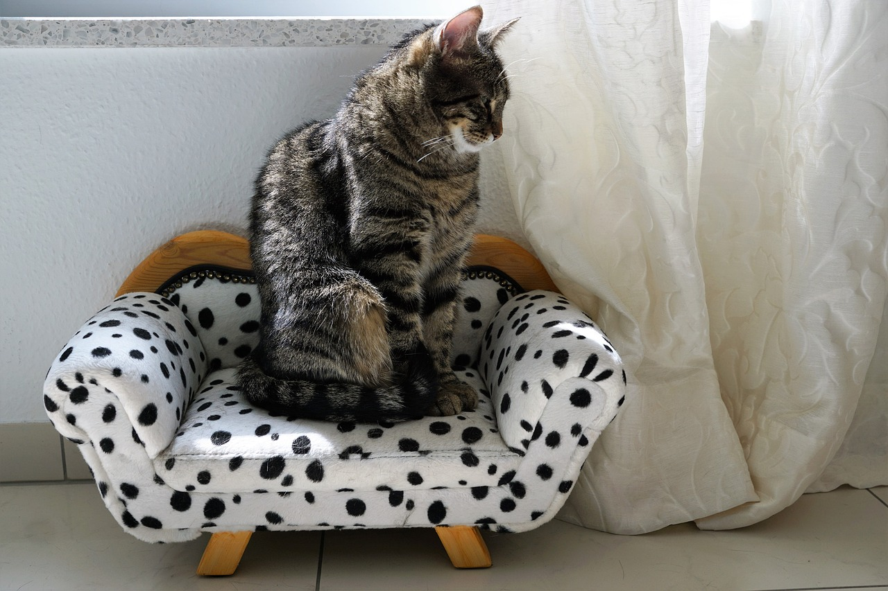 A cat sitting on top of a stuffed animal