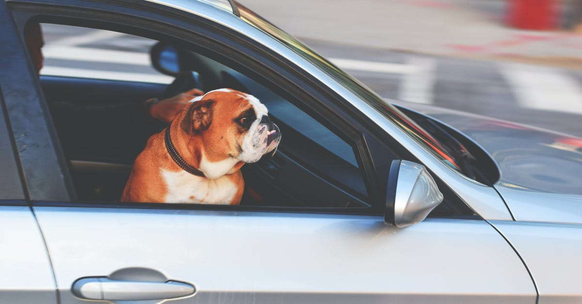 A dog sitting on top of a car