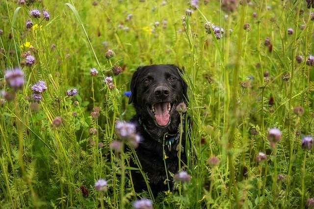 A dog sitting in the grass