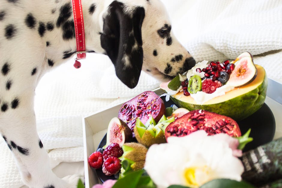 A dog sitting in front of a plate of food